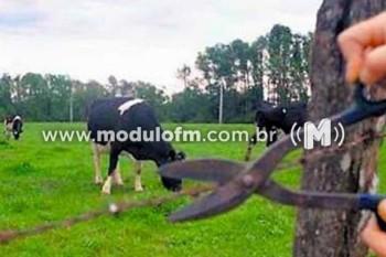 Fazendeiro tem prejuízo de R$ 17 mil com furto de cabeças de gado