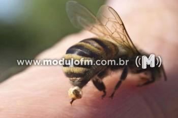 Homem fica ferido após ser atacado por abelhas