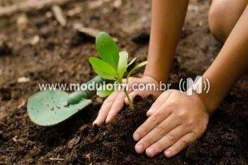 Rotary Brumado dos Pavões fará plantio de cem árvores...