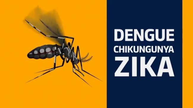 Combate ao transmissor da Dengue, febre amarela e Zika vírus.