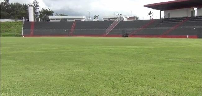 Estádio Municipal Pedro Alves do Nascimento passará por reforma no gramado