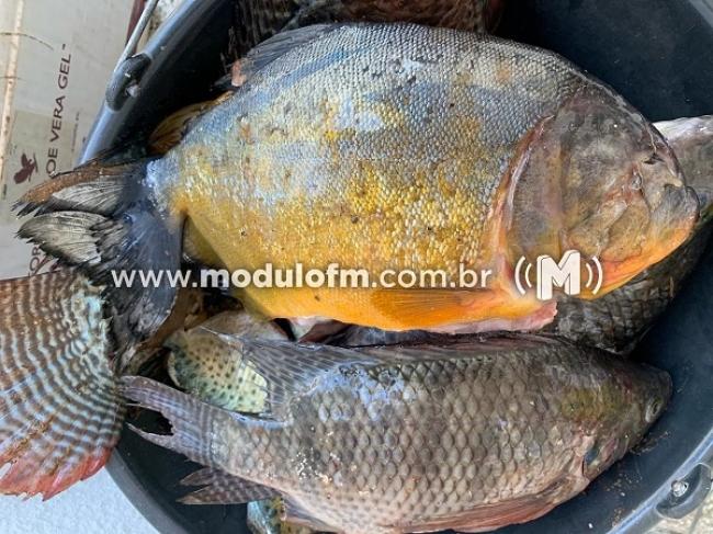 Polícia Militar flagra transporte irregular de peixes e jabutis...