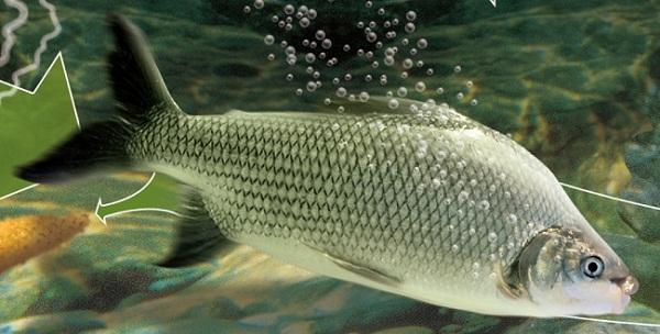 Piracema tem início com proibição de pesca no rio Quebranzol e afluentes