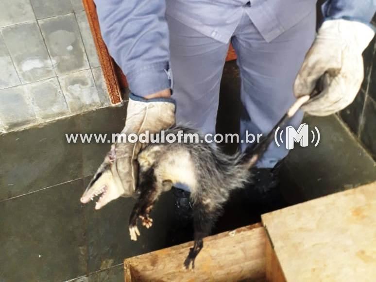 Bombeiros capturam gambá em residência