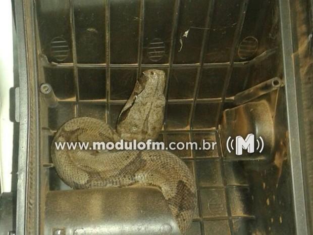Jiboia é encontrada dentro de motor de carro em posto de combustível