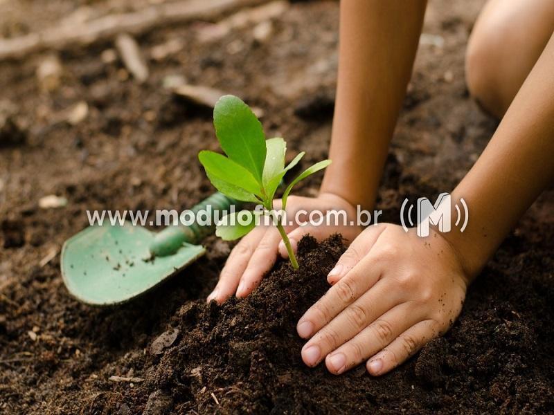 Rotary Brumado dos Pavões fará plantio de cem árvores durante campanha ambiental