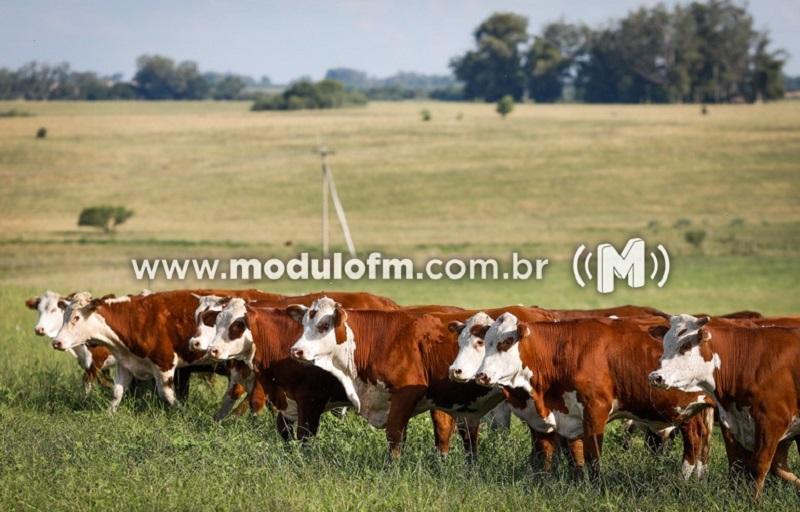 INDICADORES: Fim de semana começa (28) com queda no preço do boi gordo