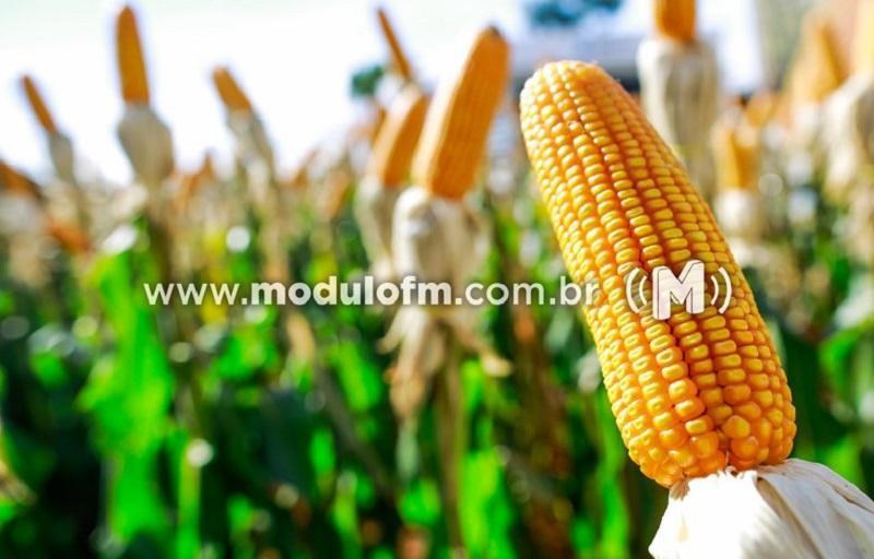 INDICADORES: Milho apresenta alta no preço nessa sexta (28)