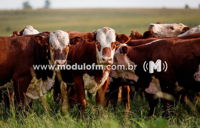 INDICADORES: Quinta-feira (27) com alta no preço do boi...