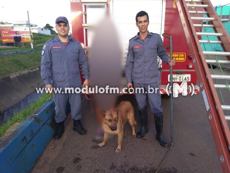 Cachorro fica preso em avenida sanitária e é salvo pelos bombeiros