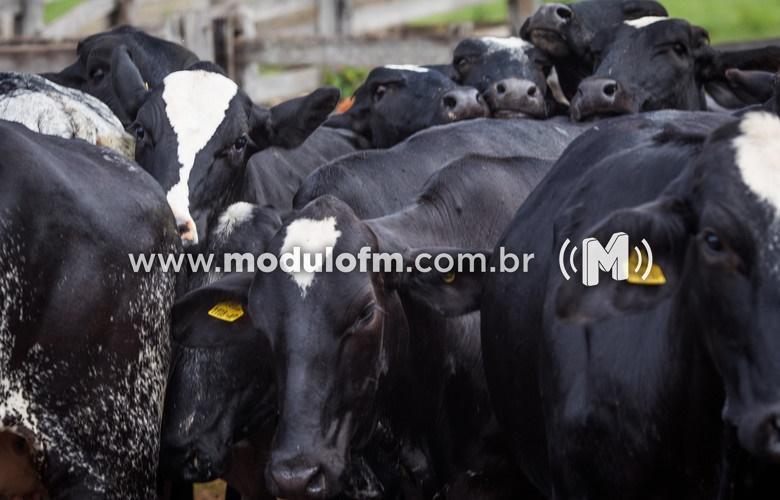 INDICADORES: Alta no preço do boi gordo nesta terça-feira (3)
