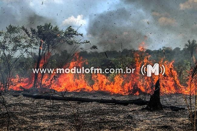 Alto Paranaíba teve mais de 400 incêndios florestais em 2020