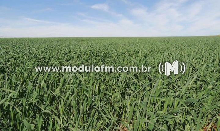 Produtores rurais devem declarar ITR e CCIR neste mês