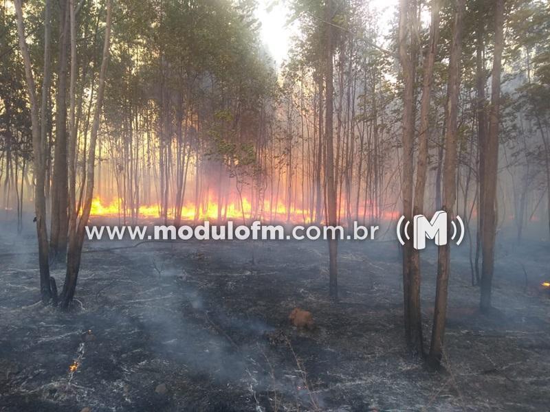 Veja o vídeo: Fogo já queimou cerca de 1 mil hectares de área de vegetação em Patrocínio