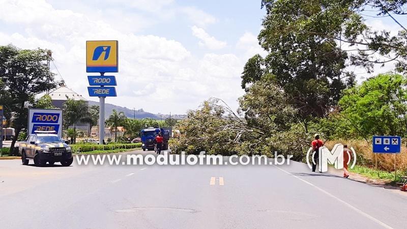 BR-365 tem trânsito interditado para poda de árvores