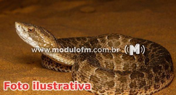 Aumenta número de cobras encontradas em residências de Patrocínio