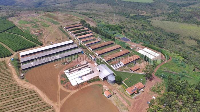 Granja de suínos de Patrocínio é a melhor em eficiência na América Latina