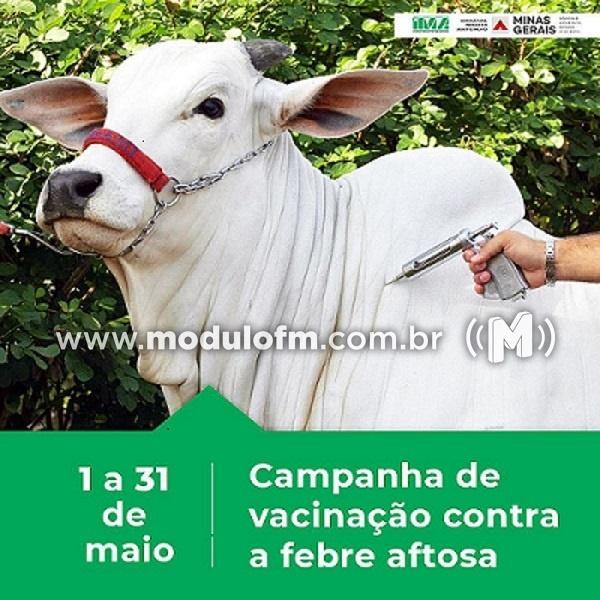 Período de vacinação contra febre aftosa já teve início e vai até 31 de maio em Minas Gerais