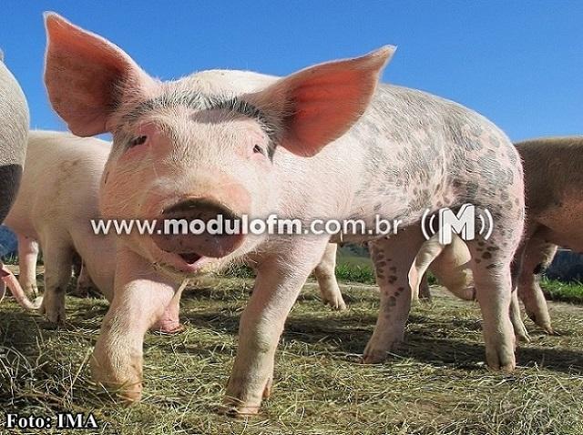 Trânsito de suínos para o abate registra alta em Minas Gerais