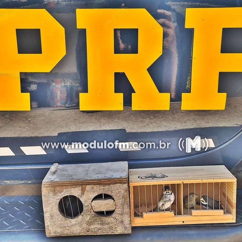 PRF apreende pássaros silvestres dentro de carro na BR-365